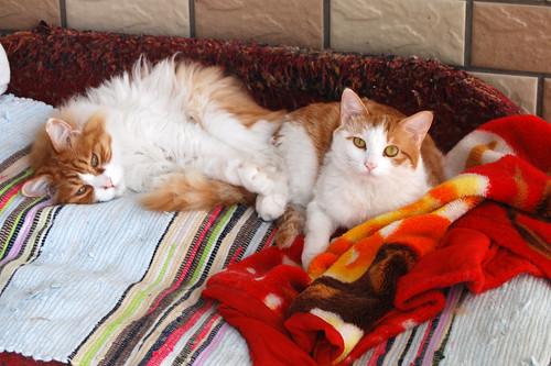 r1 - Li Cats