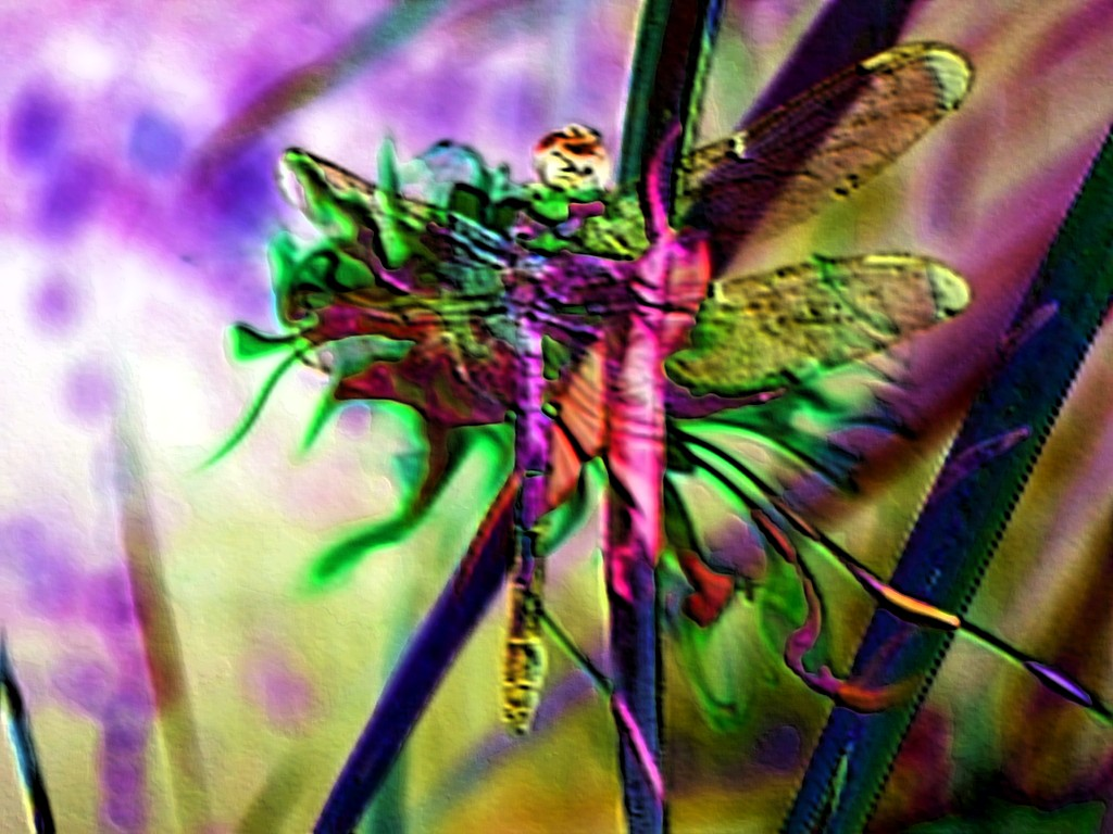 the world u0027s best photos of dragonfly and surrealism flickr hive mind
