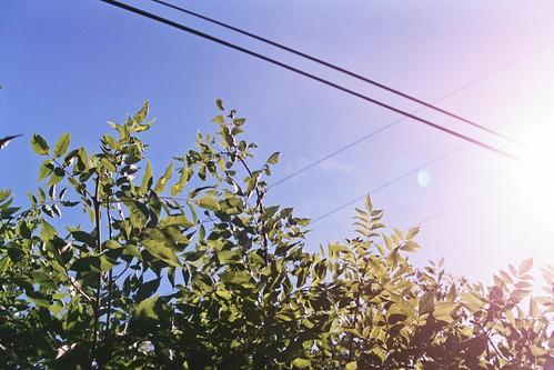 Sunny Hedgetop