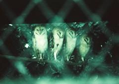 (iugmoura) Tags: brazil film zoo xpro cross pentax k1000 velvia 50 35 rs processed sapucaia
