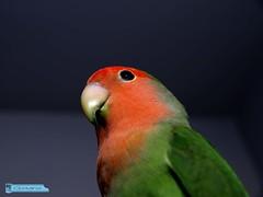 A bird (Clotario de la Cruz) Tags: bird francisco olympus valladolid clotario pjaro