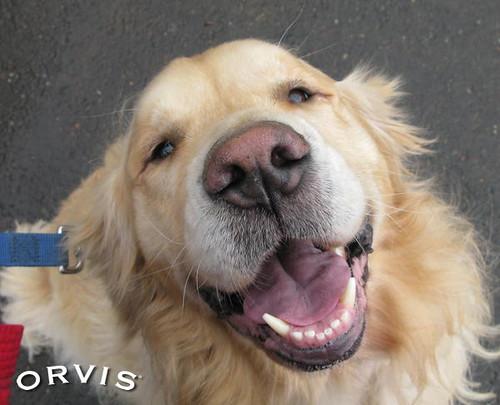 Orvis Cover Dog Contest - Kenai