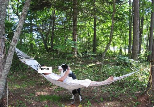 木陰のハンモックとランディ Randy in the shade of trees by Poran111
