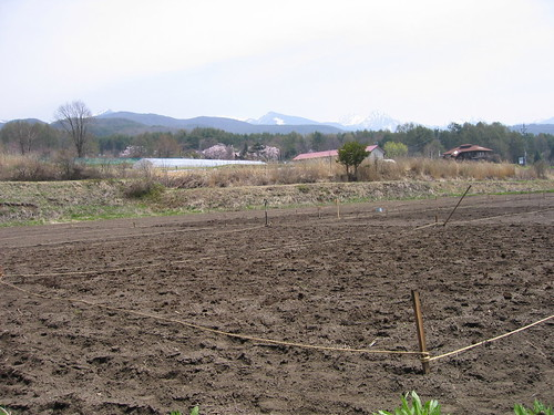 堆肥を入れた畑 08.4.28 by Poran111