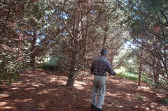 """Norm in the Magical Pine Grove <a style=""""margin-left:10px; font-size:0.8em;"""" href=""""http://www.flickr.com/photos/91915217@N00/4997189107/"""" target=""""_blank"""">@flickr</a>"""