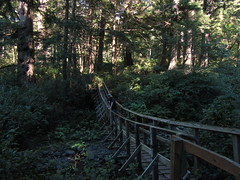 bridging the green (carolyn_in_oregon) Tags: oregon al allie pacificocean suspensionbridge oswaldweststatepark shortsandsbeach