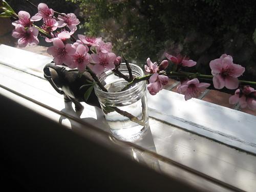 Spring in a mason jar.