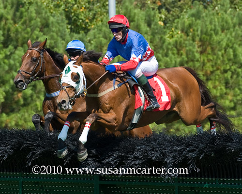 Eagle Beagle steeplechase race horse