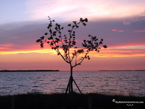 IMG_4085-Sanibel-causeway-sunset-tree