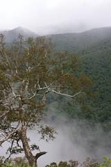 沢を流れ下る霧