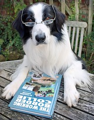Job Seeking Dog - For Stuart! (meg price) Tags: dog glasses book sheepdog read bordercollie barney workingdog mywinners thelittledoglaughed theworkingbordercollie bymarjoriequarton aninterestingreadforbordercolliesandtheirowners