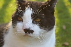 Katze (Mainboarder) Tags: katze blick tier trumen