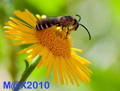 GIARDINI (zagor64.) Tags: macro fiori colori marche insetti sanbenedettodeltronto obietivonuovo macrospinto