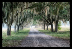 Coosaw Plantation: Avenue Of Oaks (Sco C. Hansen) Tags: trees fog south low country southcarolina southern spanishmoss beaufort lowcountry d300 beaufortcounty scotthansen coosaw spannishmoss stockphotoagency beaufortphotography wwwlowcountryphotographynet photostockagency
