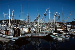 00021365 (wolfgangkaehler) Tags: usa boats harbor boat washington unitedstates unitedstatesofamerica northamerica sanjuanislands fishingboats washingtonstate fishingboat fridayharbor sanjuanisland northamerican fridayharborwa commercialboats commercialfishingboat sanjuanislandwa harborscene commercialboat sanjuanislandswa commercialfishingboats