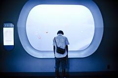 feeling down (Clark Tanaka) Tags: delete5 aquarium delete2 jellyfish delete6 delete7 save3 delete8 delete3 save7 save8 delete delete4 save save2 1600 save4 save5 save6 ef35mmf14lusm canoneos5dmarkii f16 deletedbythehotboxuncensoredgroup