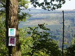 Wein in Sicht auf dem Saar-Hunsrück-Steig