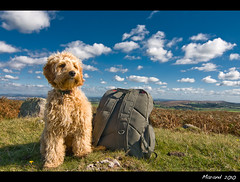 Gem Backpacking! (Andrew->) Tags: dog explore backpacking labradoodle gem bigmomma minidoodle 15challengeswinner andrewgateway herowinner ultraherowinner thepinnaclehof kanchenjungachallengewinner tphofweek65