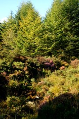 NorthGlenSannoxForest2 (Assja) Tags: autumn mountains fall water leaves forest landscape golden scotland highlands rocks stream heather herbst glen hills naturereserve valley bracken rowan isleofarran birches indiansummer birchtree schottland wirbel herbststimmung ruska naturreservat hochland wildbach zauberwald birkenwald farnkraut heidekraut ebereschen torfmoor remarkabletrees feenwald wildpfad thebrackenisgoldinthesun northendofarran subarktischestimmung