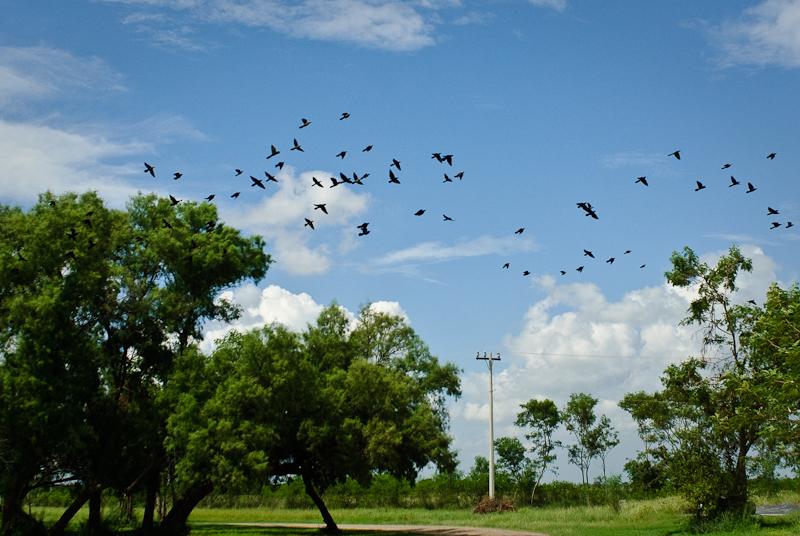 Day 348: The Birds