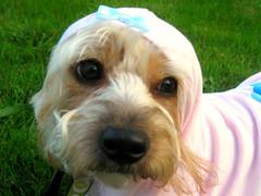 pink cute birds hoodie bow organic dogclothing ecopup ecofans