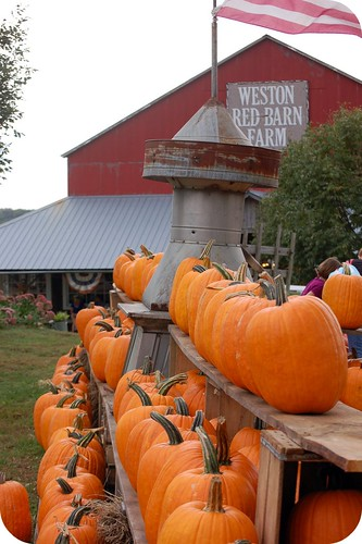 Weston Red Barn Farm, pumpkins,fall