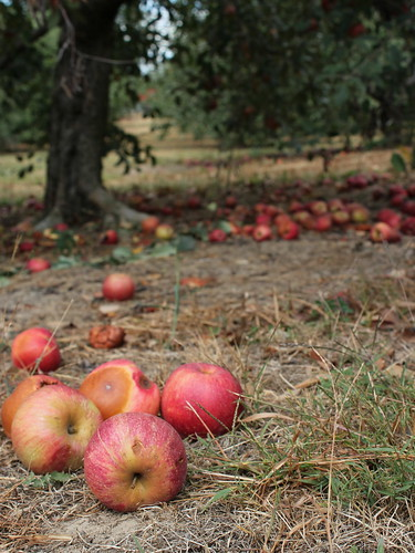 100926. anderson orchard.