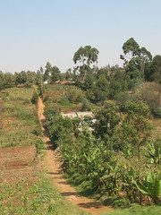 Path (aaron.knox) Tags: africa road house home field highway kenya path farm trail maize fromacar kikuyu a104 centralprovince nairobiroad