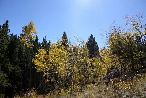 Fall leaves 11