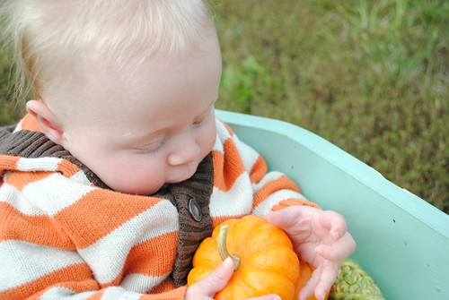 Sammy's first pumpkin