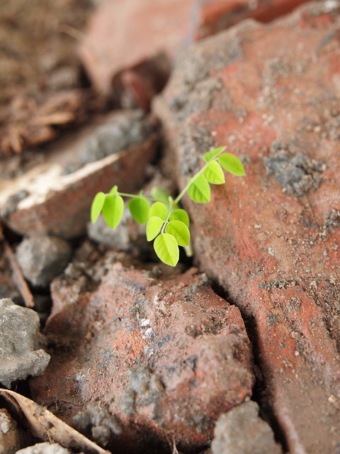 New life from rubble