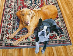 Maggie and George Painting (Amhakia) Tags: acrylicpainting petportrait dogpainting wildlifeart petart