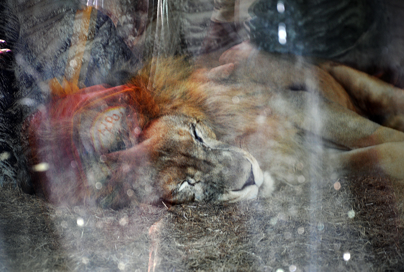 soteropoli.com fotografia fotos de salvador bahia brasil brazil 2010 zoo zoologico by tuniso (9)