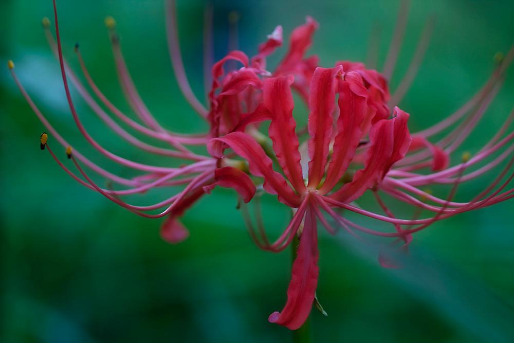 353/365 - Hurricane Lily
