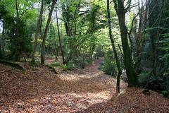 Tintern Abbey Wood (Ken Meegan) Tags: wood trees ireland tinternabbey cowexford saltmills 11112007 tinternwood tinternabbeywood