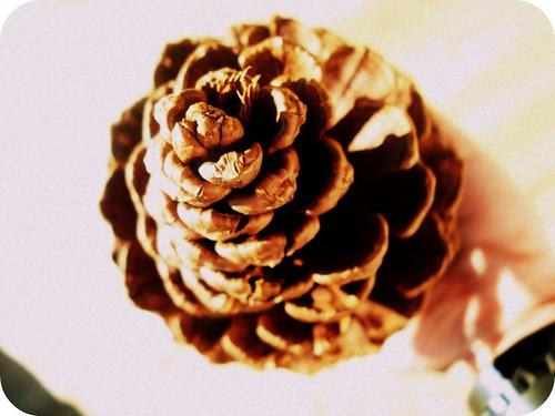 pinecone 2