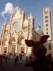Ferkel vor dem Dom von Siena