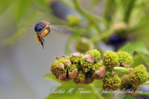 The Bee and the Oak Tree