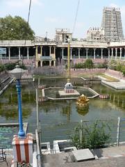 Golden Lotus Pond (Sparky the Neon Cat) Tags: india temple golden pond asia lotus amman hindu madurai tamil nadu kulam meenakshi pottramaraikulam pottramarai sundareswarar porthamarai