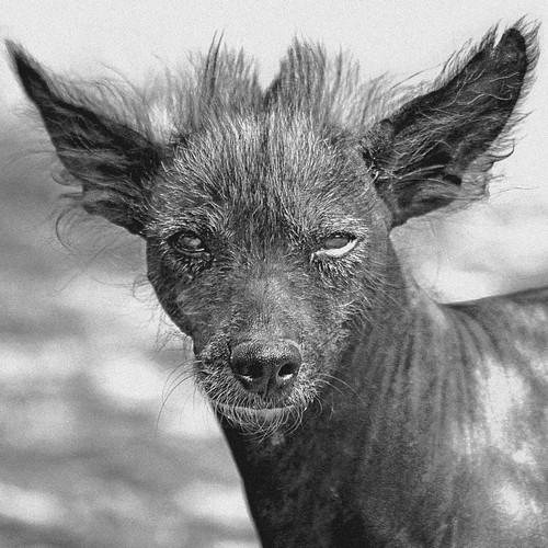 Todas las razas de perros del mundo (megapost mpliable)