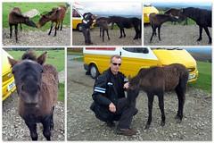 Dartmoor.. (Mike-Lee) Tags: uk mike collage jill picasa devon ponies dartmoor haytor sept2010