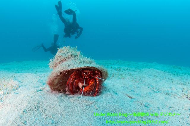 白砂の上のヤドカリ (Hermit crab on white sand)
