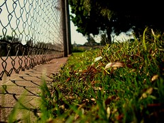 Depth of [the] Field (Renz.) Tags: trees red sky nature grass fence concrete deadleaves outoffocus depthoffield