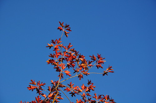 Red Leaves and Sky