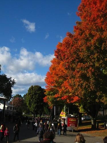 Oct16-Rhinebeck1
