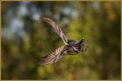 S P E E D (Joost N.) Tags: holland bird ass animal garden fly frozen flying wings nikon bevroren vlucht flight wing nederland hanging midair vogel 14000 niceass landsmeer vleugel vleugels koolmeesje
