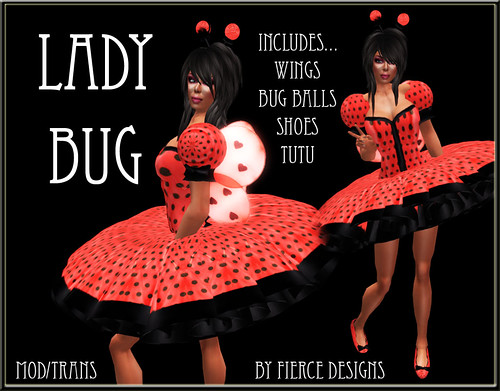 lady bug (adult)