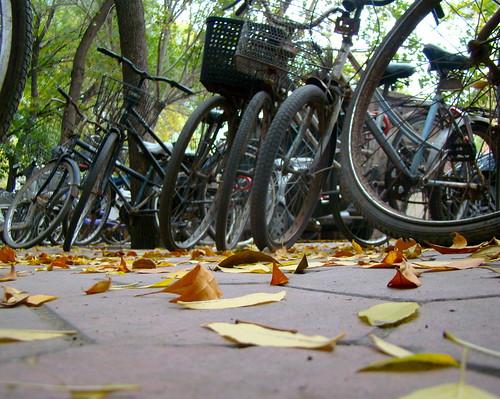 Bicicletas en otoño
