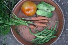 July Harvest
