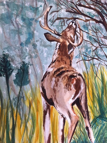 Deer Hunting the Whitetail Pre Rut: In Watercolor whitetail deer hunting blog
